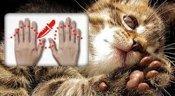 cat declawing