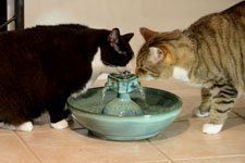 Cats love moving water.