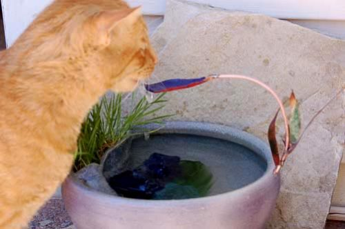 Bijou drinking from his first fountain - no more cat water bowl
