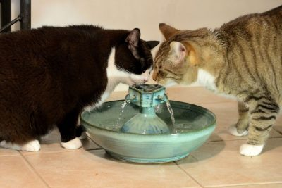 cats drinking water from a fountain