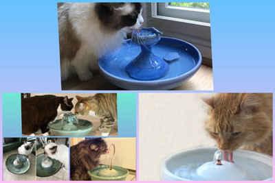 Are Cat Fountains Worth It?