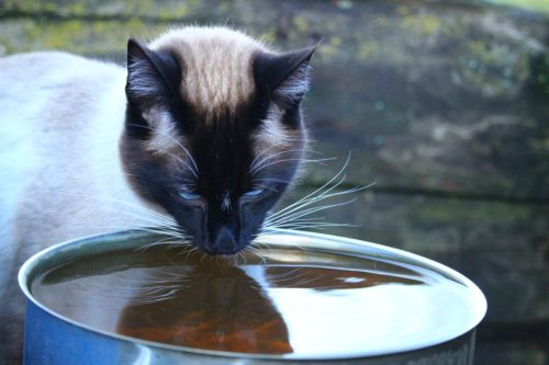 change cat water