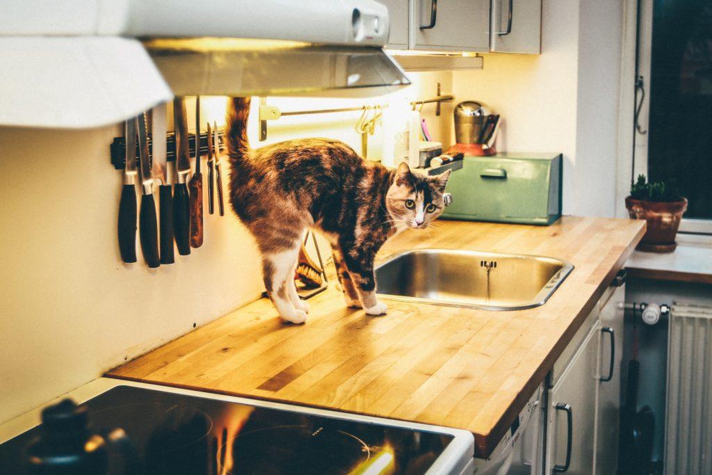 cat discipline
