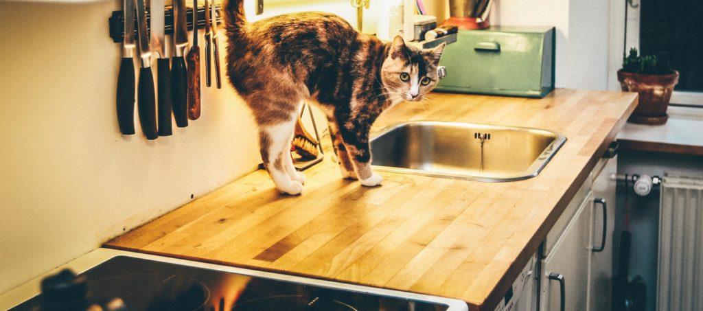 discipline cat