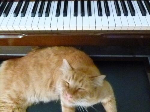 cats music